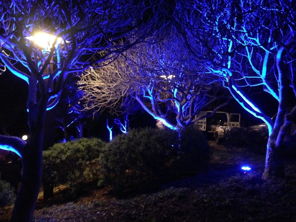 Elings Park uplighting in Godric Grove